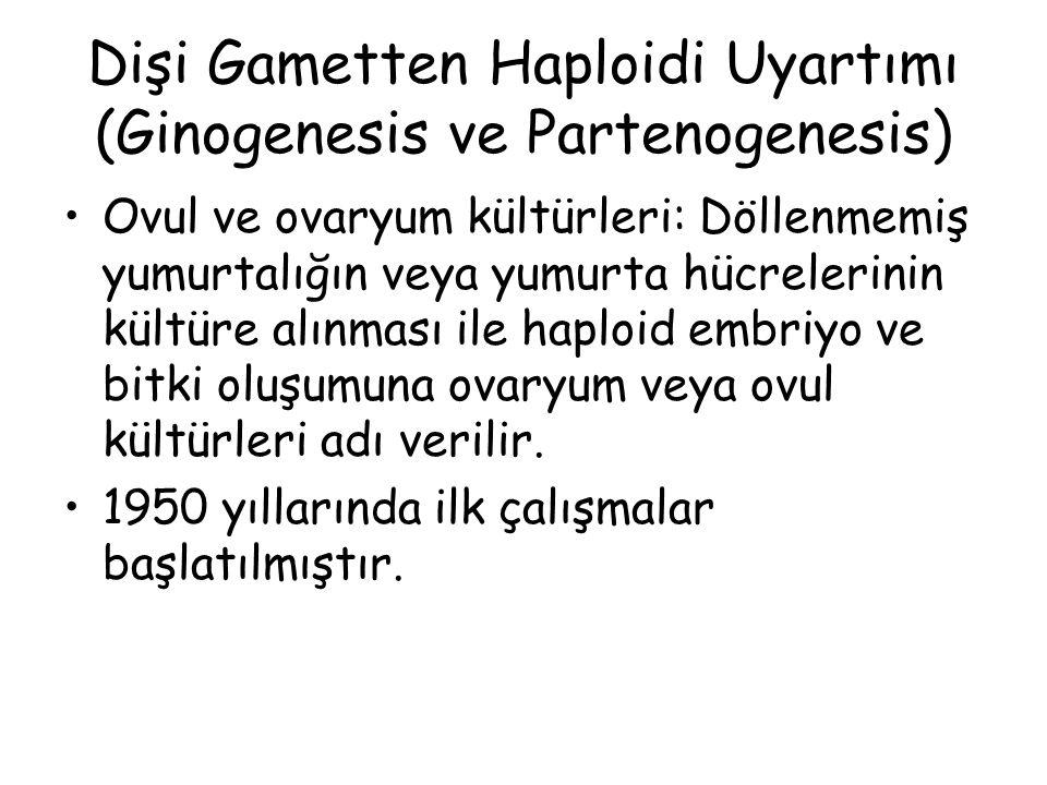 Dişi Gametten Haploidi Uyartımı (Ginogenesis ve Partenogenesis) Ovul ve ovaryum kültürleri: Döllenmemiş yumurtalığın veya yumurta hücrelerinin kültüre alınması ile haploid embriyo ve bitki oluşumuna ovaryum veya ovul kültürleri adı verilir.