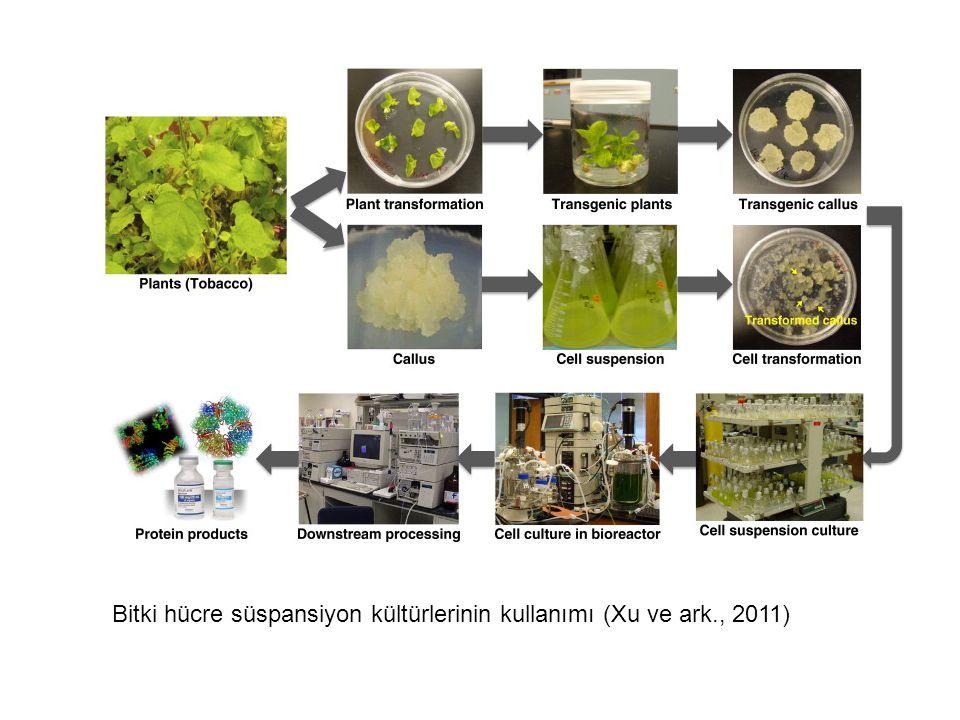 Bitki hücre süspansiyon kültürlerinin kullanımı (Xu ve ark., 2011)
