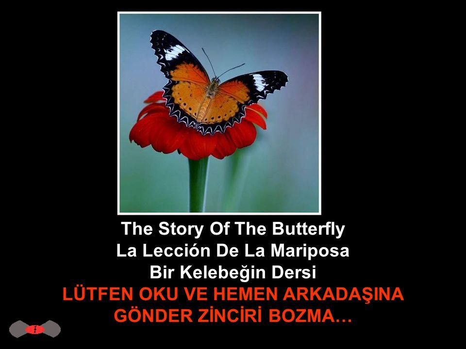 The Story Of The Butterfly La Lección De La Mariposa Bir Kelebeğin Dersi LÜTFEN OKU VE HEMEN ARKADAŞINA GÖNDER ZİNCİRİ BOZMA…