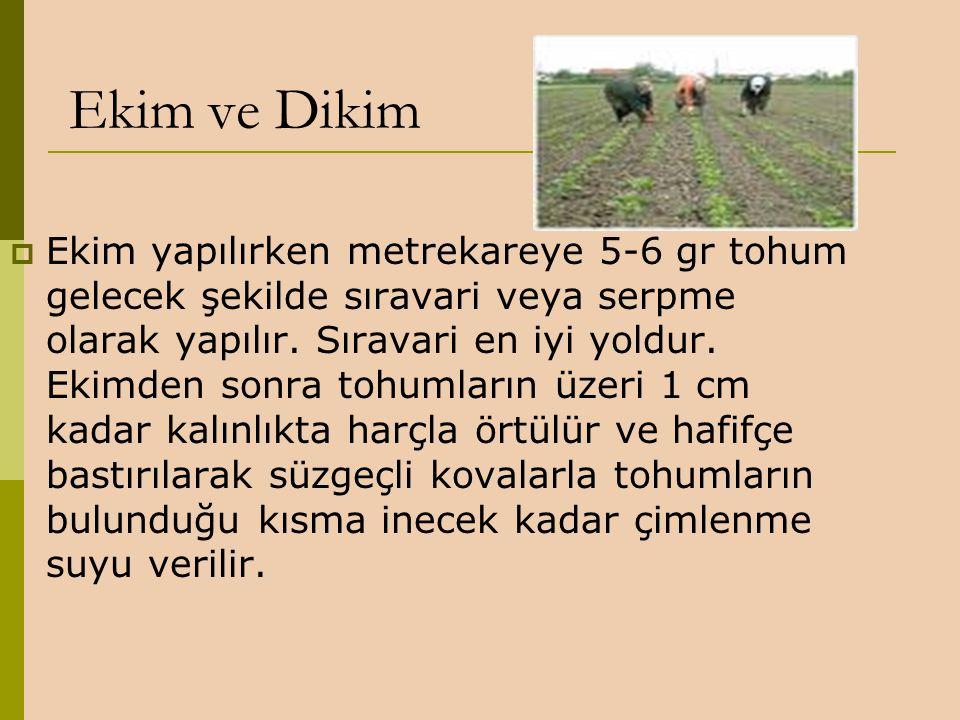 Ekim ve Dikim  Ekim yapılırken metrekareye 5-6 gr tohum gelecek şekilde sıravari veya serpme olarak yapılır. Sıravari en iyi yoldur. Ekimden sonra to