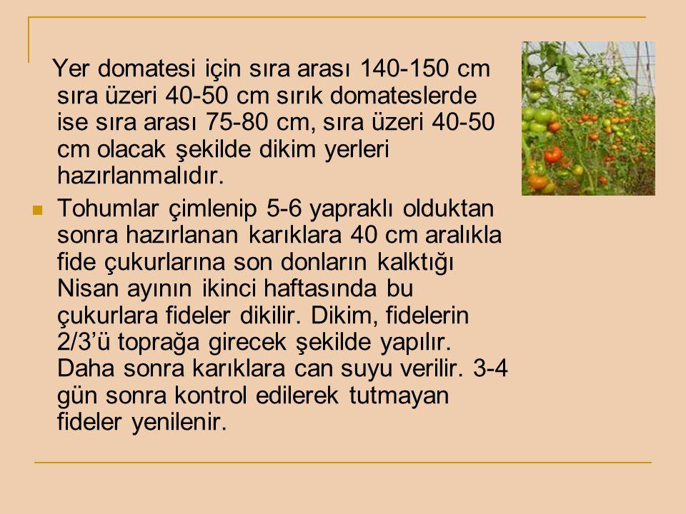 Yer domatesi için sıra arası 140-150 cm sıra üzeri 40-50 cm sırık domateslerde ise sıra arası 75-80 cm, sıra üzeri 40-50 cm olacak şekilde dikim yerle