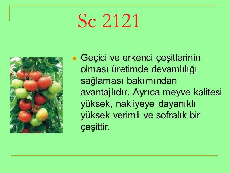 Sc 2121 Geçici ve erkenci çeşitlerinin olması üretimde devamlılığı sağlaması bakımından avantajlıdır. Ayrıca meyve kalitesi yüksek, nakliyeye dayanıkl
