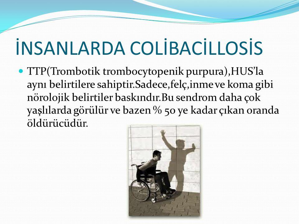 İNSANLARDA COLİBACİLLOSİS TTP(Trombotik trombocytopenik purpura),HUS'la aynı belirtilere sahiptir.Sadece,felç,inme ve koma gibi nörolojik belirtiler b
