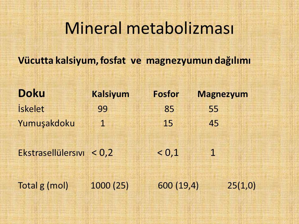 Mineral metabolizması Vücutta kalsiyum, fosfat ve magnezyumun dağılımı Doku Kalsiyum FosforMagnezyum İskelet 99 85 55 Yumuşakdoku 1 15 45 Ekstrasellül