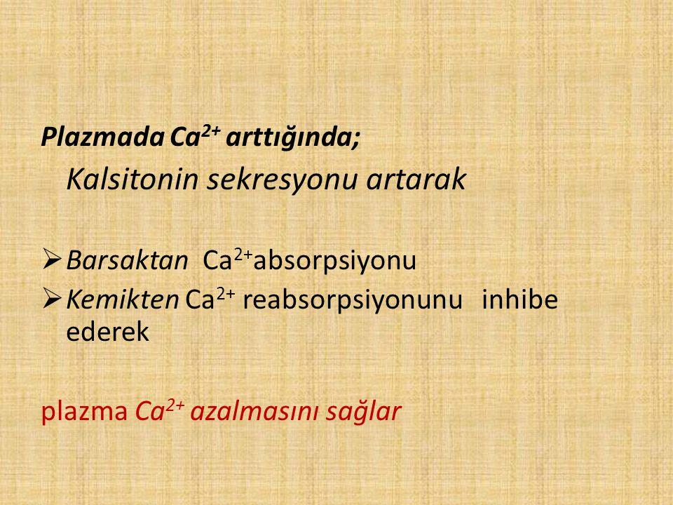 Plazmada Ca 2+ arttığında; Kalsitonin sekresyonu artarak  Barsaktan Ca 2+ absorpsiyonu  Kemikten Ca 2+ reabsorpsiyonunu inhibe ederek plazma Ca 2+ a