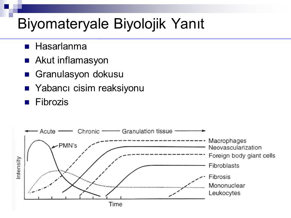 Biyomateryale Biyolojik Yanıt Hasarlanma Akut inflamasyon Granulasyon dokusu Yabancı cisim reaksiyonu Fibrozis