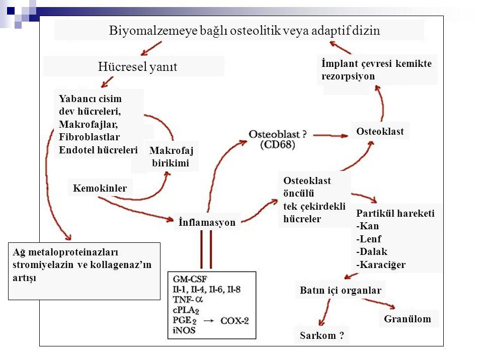 Biyomalzemeye bağlı osteolitik veya adaptif dizin Hücresel yanıt Yabancı cisim dev hücreleri, Makrofajlar, Fibroblastlar Endotel hücreleri Makrofaj bi