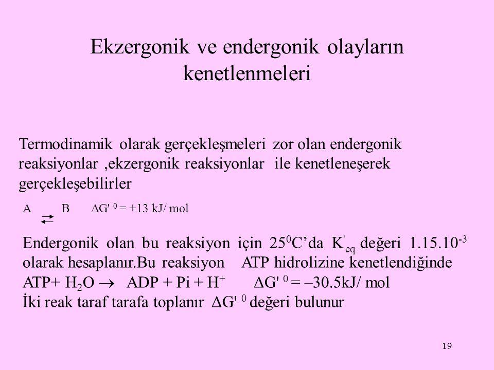 Ekzergonik ve endergonik olayların kenetlenmeleri 19 Termodinamik olarak gerçekleşmeleri zor olan endergonik reaksiyonlar,ekzergonik reaksiyonlar ile
