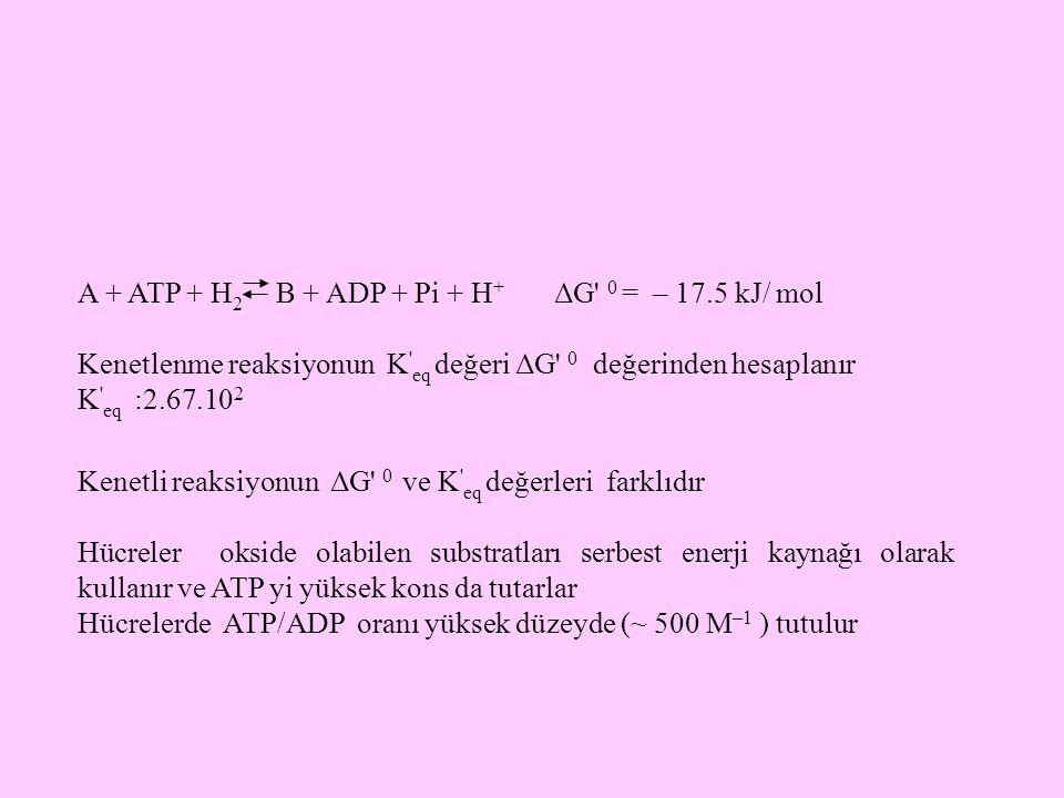 A + ATP + H 2 B + ADP + Pi + H + ΔG' 0 = – 17.5 kJ/ mol Kenetlenme reaksiyonun K ' eq değeri ΔG' 0 değerinden hesaplanır K ' eq :2.67.10 2 Kenetli rea