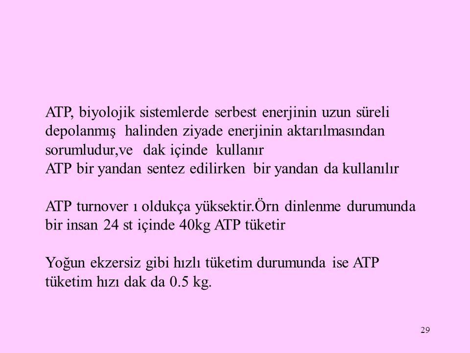 29 ATP, biyolojik sistemlerde serbest enerjinin uzun süreli depolanmış halinden ziyade enerjinin aktarılmasından sorumludur,ve dak içinde kullanır ATP