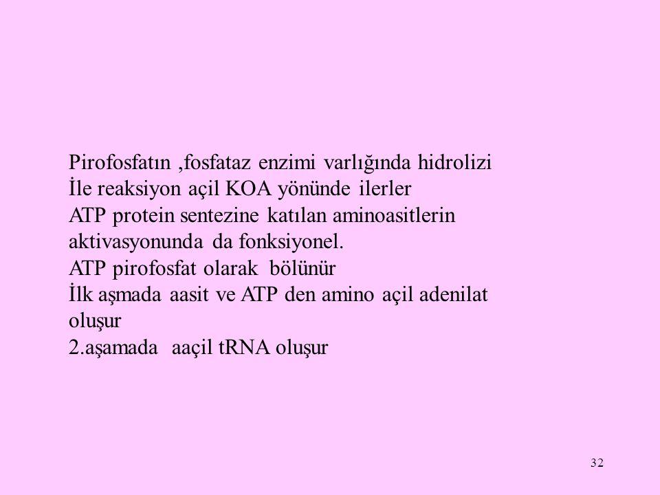 32 Pirofosfatın,fosfataz enzimi varlığında hidrolizi İle reaksiyon açil KOA yönünde ilerler ATP protein sentezine katılan aminoasitlerin aktivasyonund