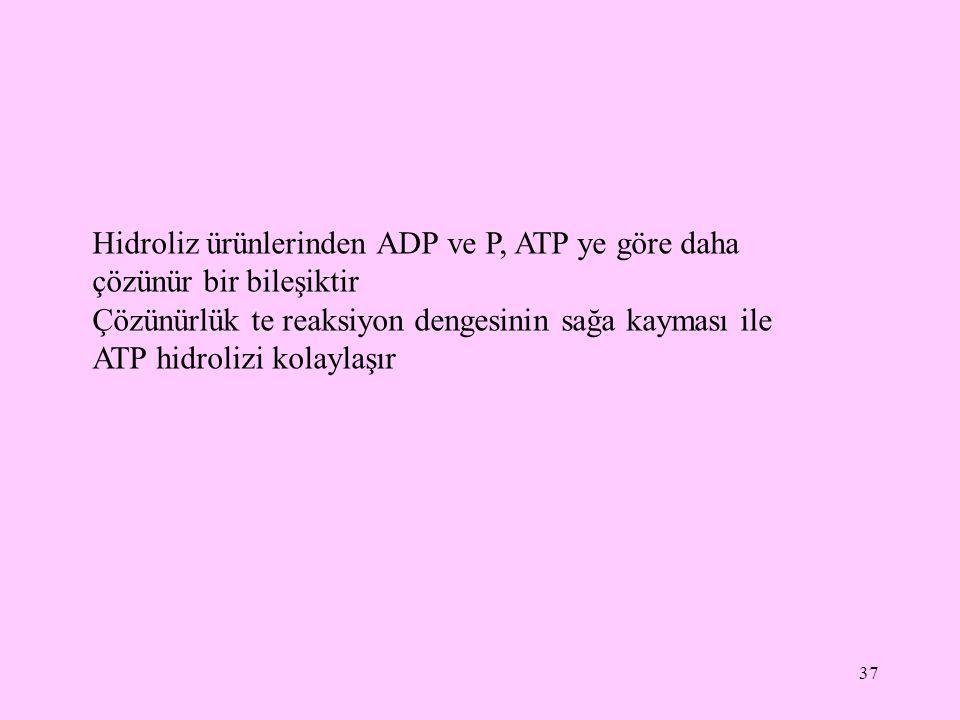 37 Hidroliz ürünlerinden ADP ve P, ATP ye göre daha çözünür bir bileşiktir Çözünürlük te reaksiyon dengesinin sağa kayması ile ATP hidrolizi kolaylaşı