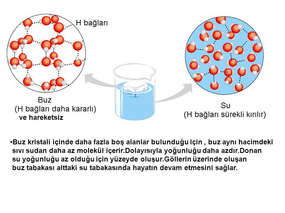 ve hareketsiz Buz kristali içinde daha fazla boş alanlar bulunduğu için, buz aynı hacimdeki sıvı sudan daha az molekül içerir.Dolayısıyla yoğunluğu da