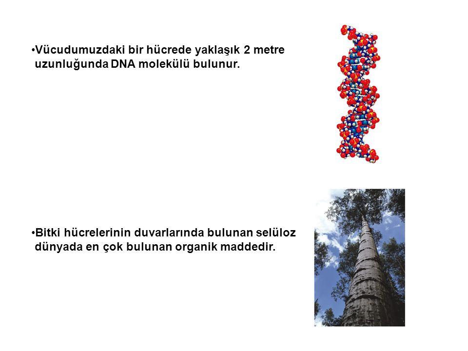 Vücudumuzdaki bir hücrede yaklaşık 2 metre uzunluğunda DNA molekülü bulunur. Bitki hücrelerinin duvarlarında bulunan selüloz dünyada en çok bulunan or