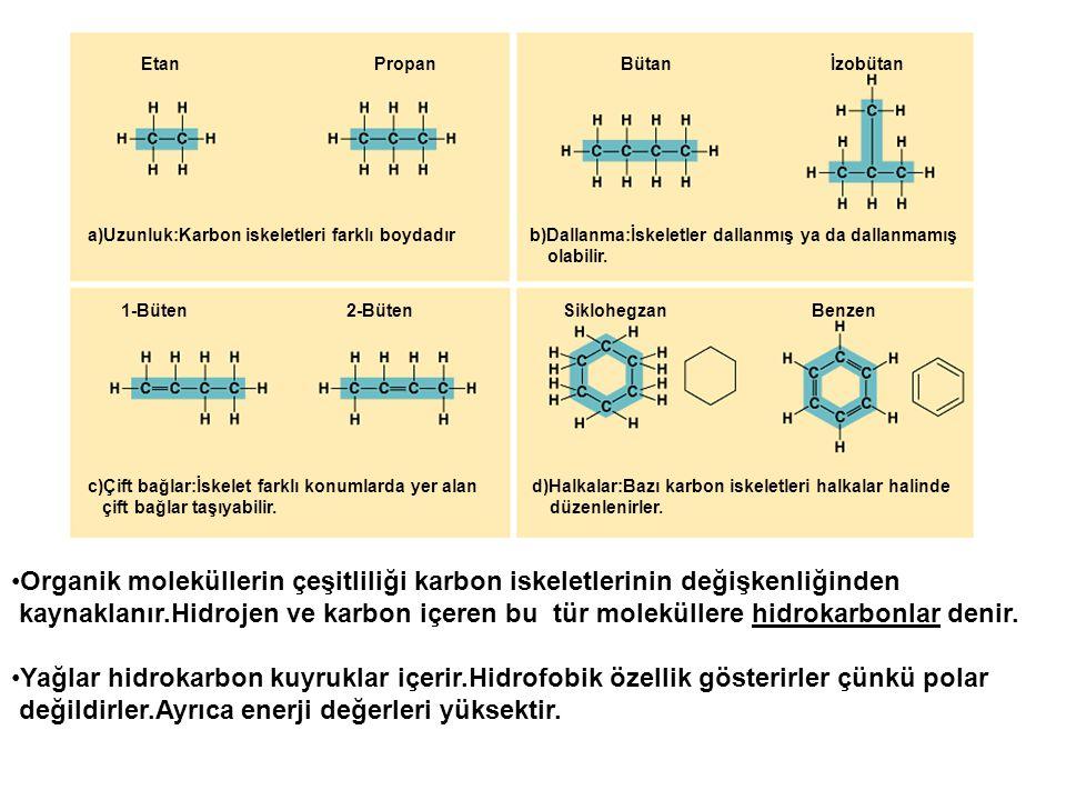 Etan Propan Bütan İzobütan a)Uzunluk:Karbon iskeletleri farklı boydadır b)Dallanma:İskeletler dallanmış ya da dallanmamış olabilir. 1-Büten 2-Büten Si