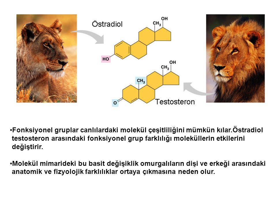 Fonksiyonel gruplar canlılardaki molekül çeşitliliğini mümkün kılar.Östradiol testosteron arasındaki fonksiyonel grup farklılığı moleküllerin etkileri