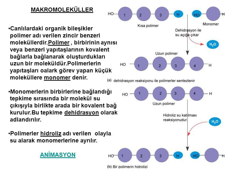 MAKROMOLEKÜLLER Canlılardaki organik bileşikler polimer adı verilen zincir benzeri moleküllerdir.Polimer, birbirinin aynısı veya benzeri yapıtaşlarını