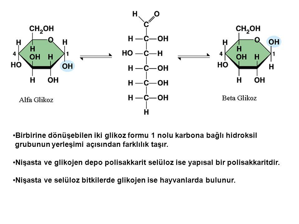 Birbirine dönüşebilen iki glikoz formu 1 nolu karbona bağlı hidroksil grubunun yerleşimi açısından farklılık taşır. Nişasta ve glikojen depo polisakka