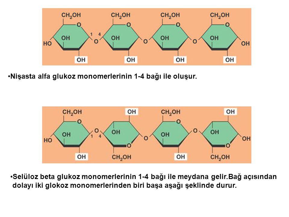Nişasta alfa glukoz monomerlerinin 1-4 bağı ile oluşur. Selüloz beta glukoz monomerlerinin 1-4 bağı ile meydana gelir.Bağ açısından dolayı iki glokoz