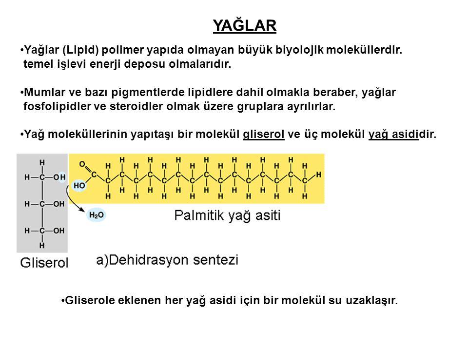 YAĞLAR Yağlar (Lipid) polimer yapıda olmayan büyük biyolojik moleküllerdir. temel işlevi enerji deposu olmalarıdır. Mumlar ve bazı pigmentlerde lipidl