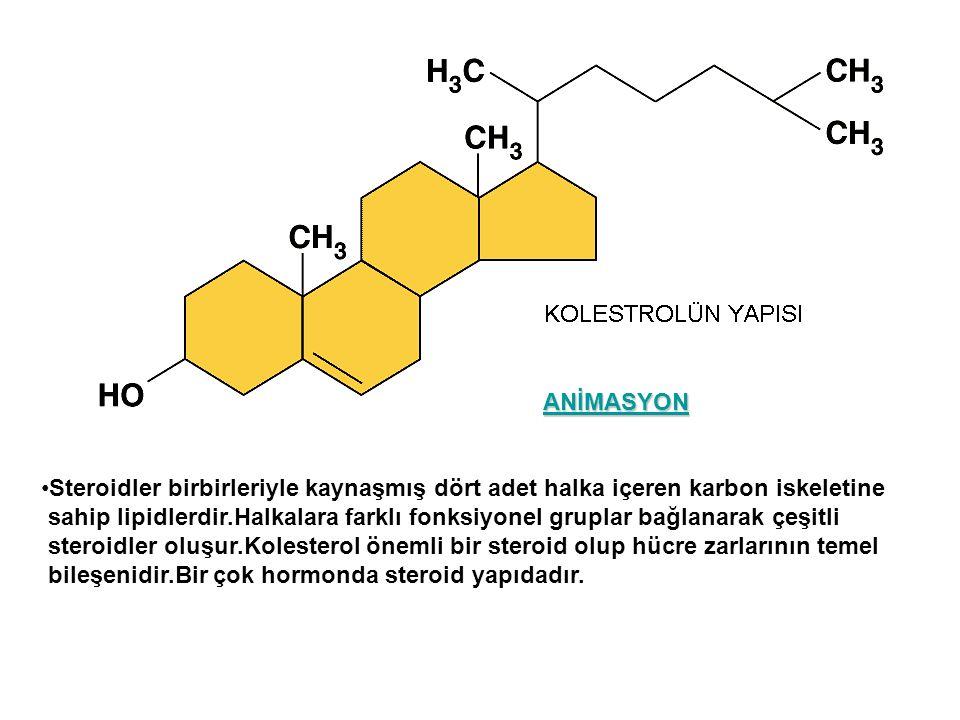 Steroidler birbirleriyle kaynaşmış dört adet halka içeren karbon iskeletine sahip lipidlerdir.Halkalara farklı fonksiyonel gruplar bağlanarak çeşitli