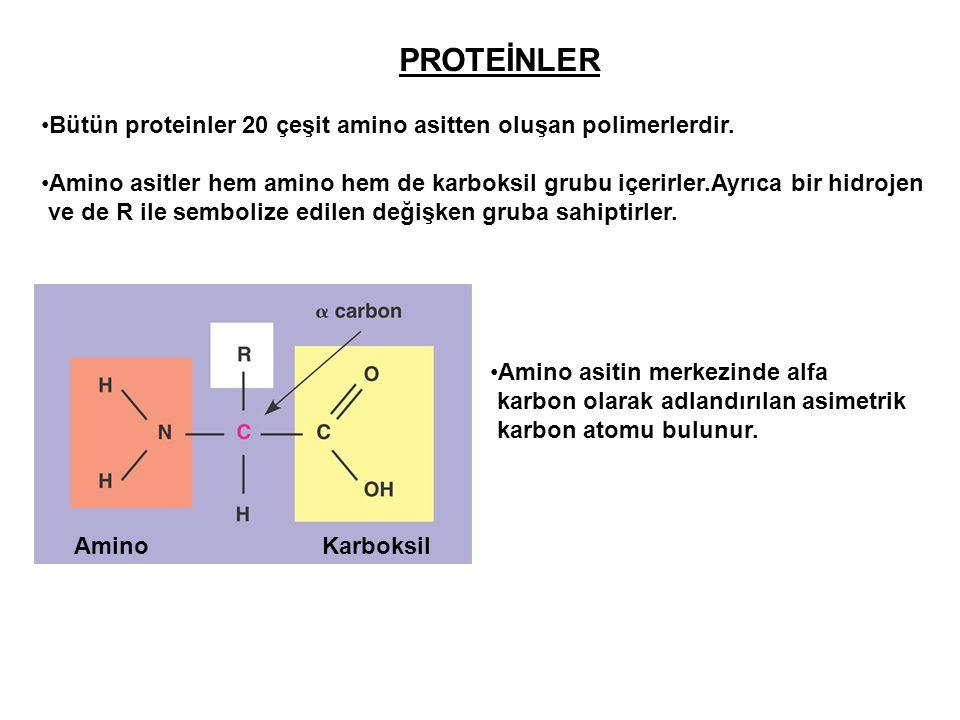 PROTEİNLER Bütün proteinler 20 çeşit amino asitten oluşan polimerlerdir. Amino asitler hem amino hem de karboksil grubu içerirler.Ayrıca bir hidrojen