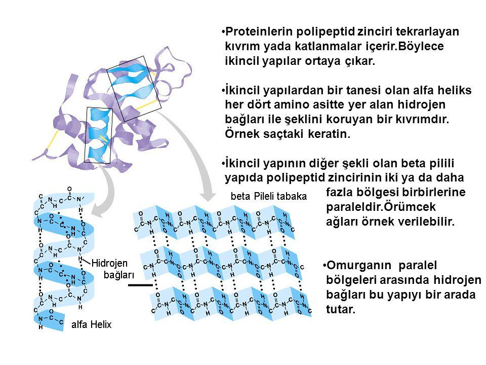 Proteinlerin polipeptid zinciri tekrarlayan kıvrım yada katlanmalar içerir.Böylece ikincil yapılar ortaya çıkar. İkincil yapılardan bir tanesi olan al