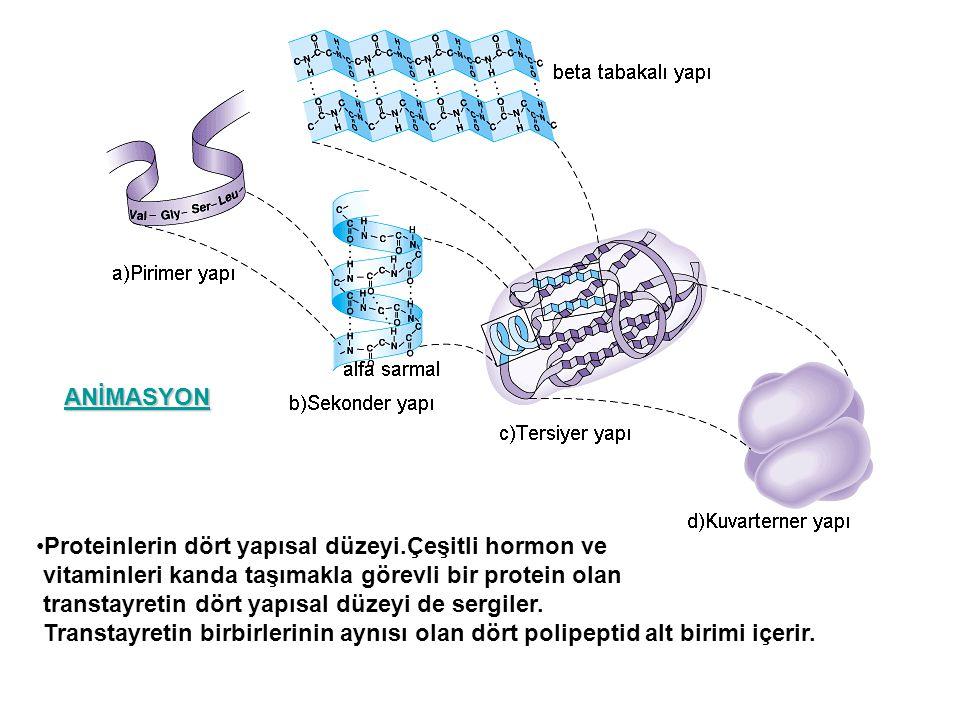 Proteinlerin dört yapısal düzeyi.Çeşitli hormon ve vitaminleri kanda taşımakla görevli bir protein olan transtayretin dört yapısal düzeyi de sergiler.