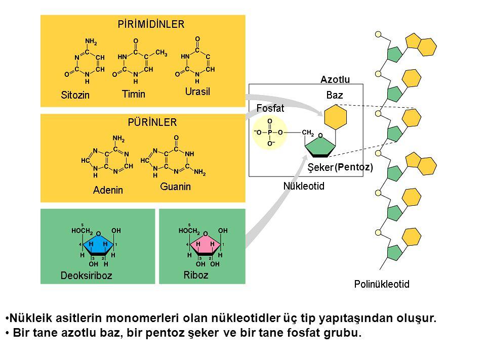 Nükleik asitlerin monomerleri olan nükleotidler üç tip yapıtaşından oluşur. Bir tane azotlu baz, bir pentoz şeker ve bir tane fosfat grubu. Azotlu (Pe