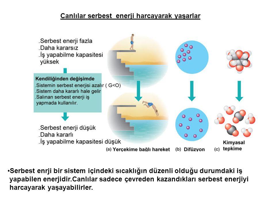 Canlılar serbest enerji harcayarak yaşarlar Serbest enrji bir sistem içindeki sıcaklığın düzenli olduğu durumdaki iş yapabilen enerjidir.Canlılar sade