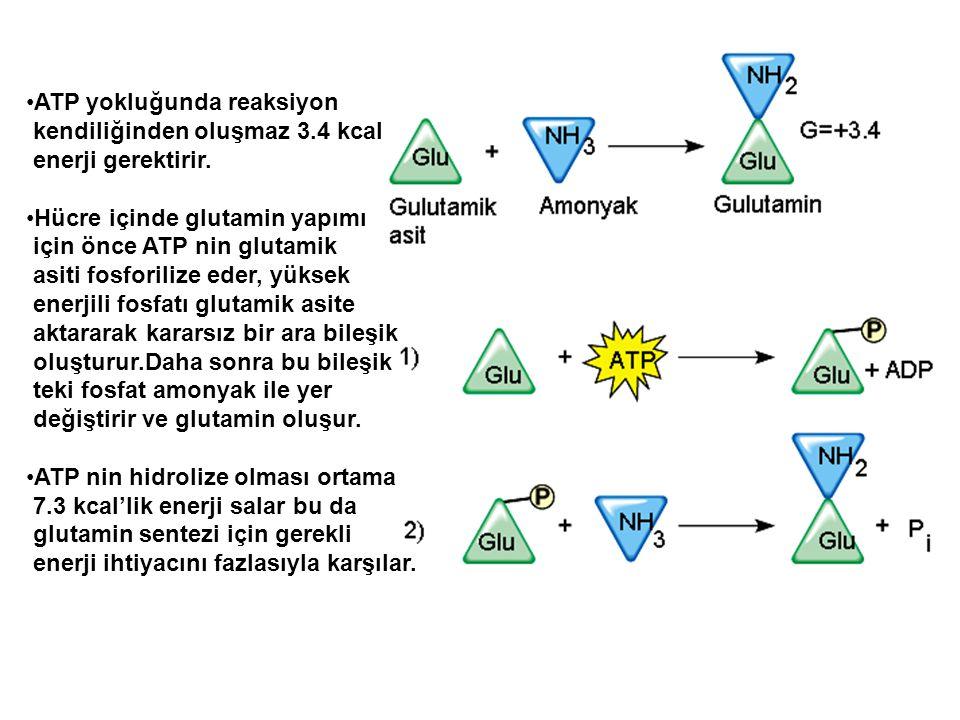 ATP yokluğunda reaksiyon kendiliğinden oluşmaz 3.4 kcal enerji gerektirir. Hücre içinde glutamin yapımı için önce ATP nin glutamik asiti fosforilize e
