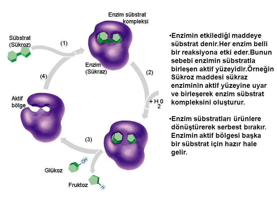 Enzimin etkilediği maddeye sübstrat denir.Her enzim belli bir reaksiyona etki eder.Bunun sebebi enzimin sübstratla birleşen aktif yüzeyidir.Örneğin Sü