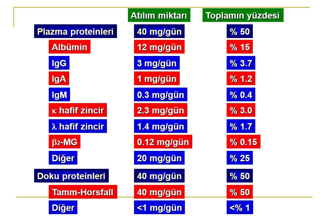 Plazma proteinleri Doku proteinleri Albümin Atılım miktarı Toplamın yüzdesi IgG IgA IgM  hafif zincir hafif zincir hafif zincir  2 -MG 12 mg/gün % 1
