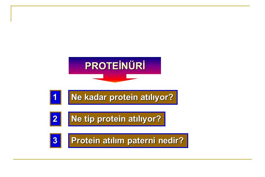 1 Ne kadar protein atılıyor? 2 Ne tip protein atılıyor? 3 Protein atılım paterni nedir? PROTEİNÜRİ