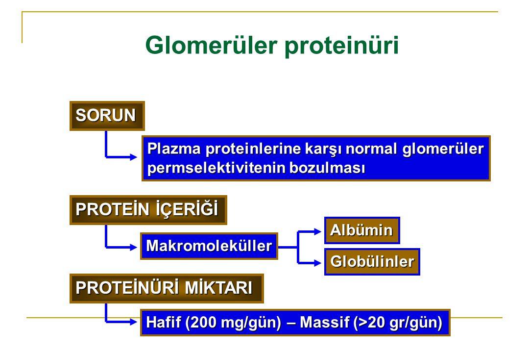 Glomerüler proteinüri Plazma proteinlerine karşı normal glomerüler permselektivitenin bozulması Albümin Globülinler Hafif (200 mg/gün) – Massif (>20 g