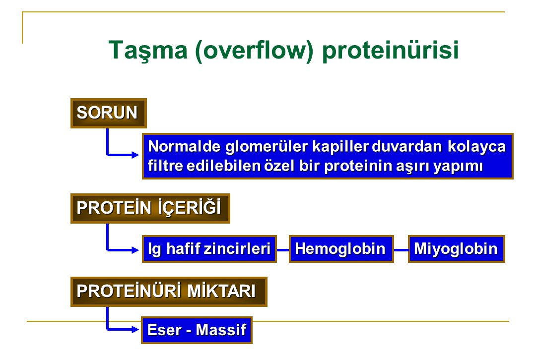 Taşma (overflow) proteinürisi Normalde glomerüler kapiller duvardan kolayca filtre edilebilen özel bir proteinin aşırı yapımı Miyoglobin Eser - Massif