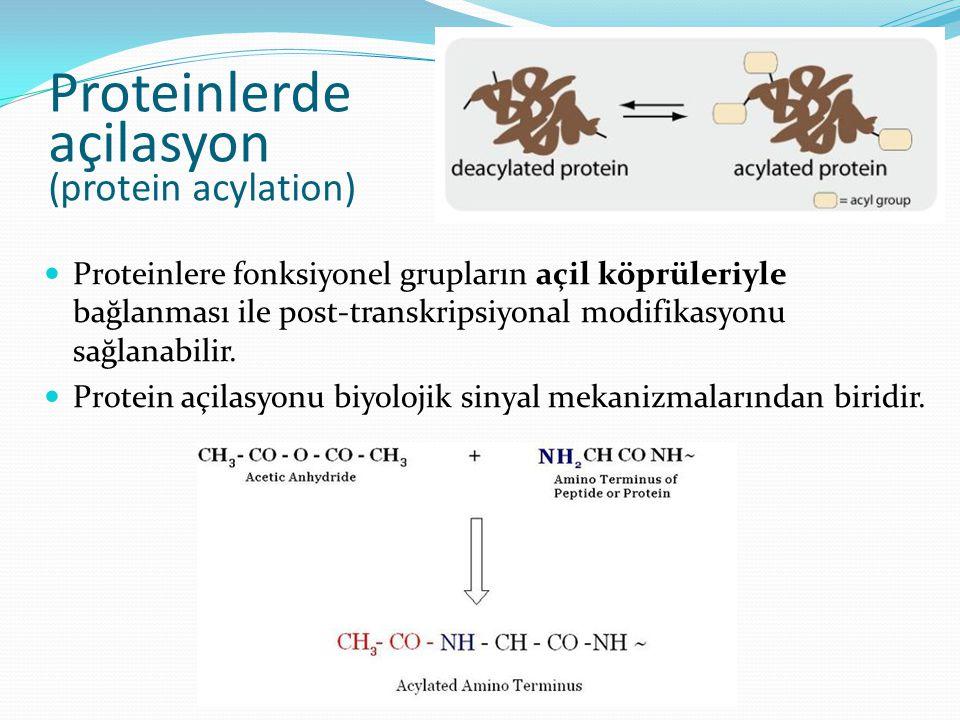 Proteinlerde açilasyon (protein acylation) Proteinlere fonksiyonel grupların açil köprüleriyle bağlanması ile post-transkripsiyonal modifikasyonu sağl
