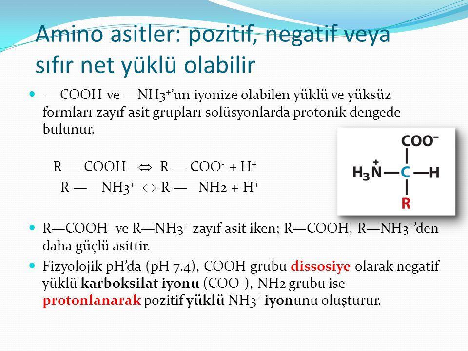 Amino asitler: pozitif, negatif veya sıfır net yüklü olabilir —COOH ve —NH3 + 'un iyonize olabilen yüklü ve yüksüz formları zayıf asit grupları solüsy
