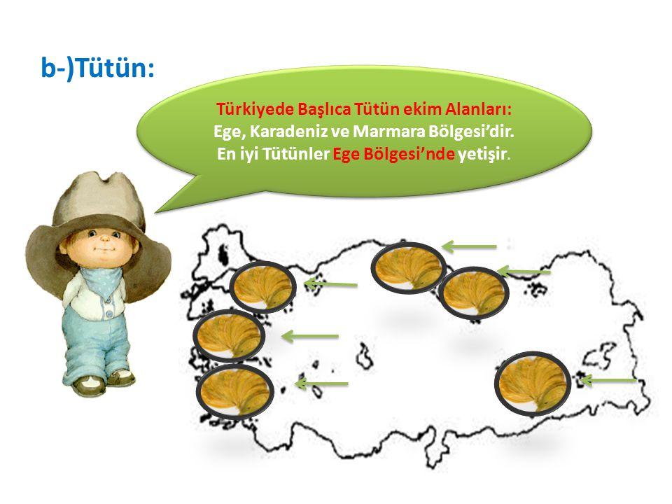b-)Tütün: Türkiyede Başlıca Tütün ekim Alanları: Ege, Karadeniz ve Marmara Bölgesi'dir. En iyi Tütünler Ege Bölgesi'nde yetişir.
