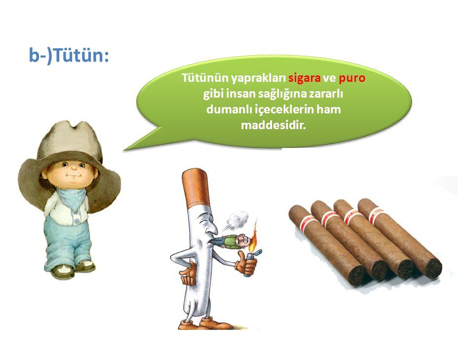 b-)Tütün: Tütünün yaprakları sigara ve puro gibi insan sağlığına zararlı dumanlı içeceklerin ham maddesidir.
