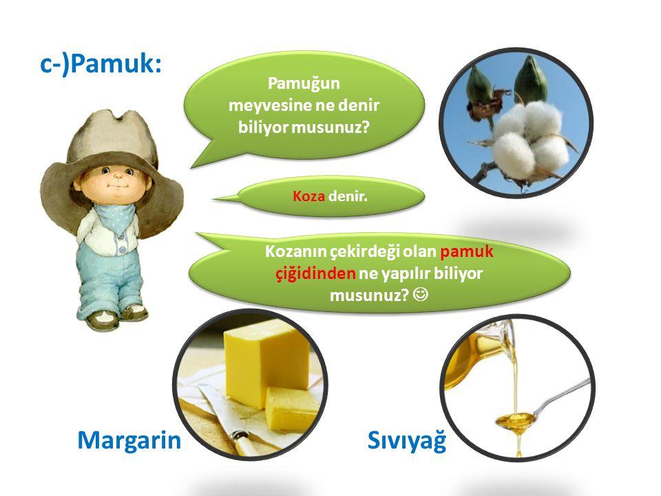 c-)Pamuk: Margarin Sıvıyağ Pamuğun meyvesine ne denir biliyor musunuz? Kozanın çekirdeği olan pamuk çiğidinden ne yapılır biliyor musunuz? Koza denir.