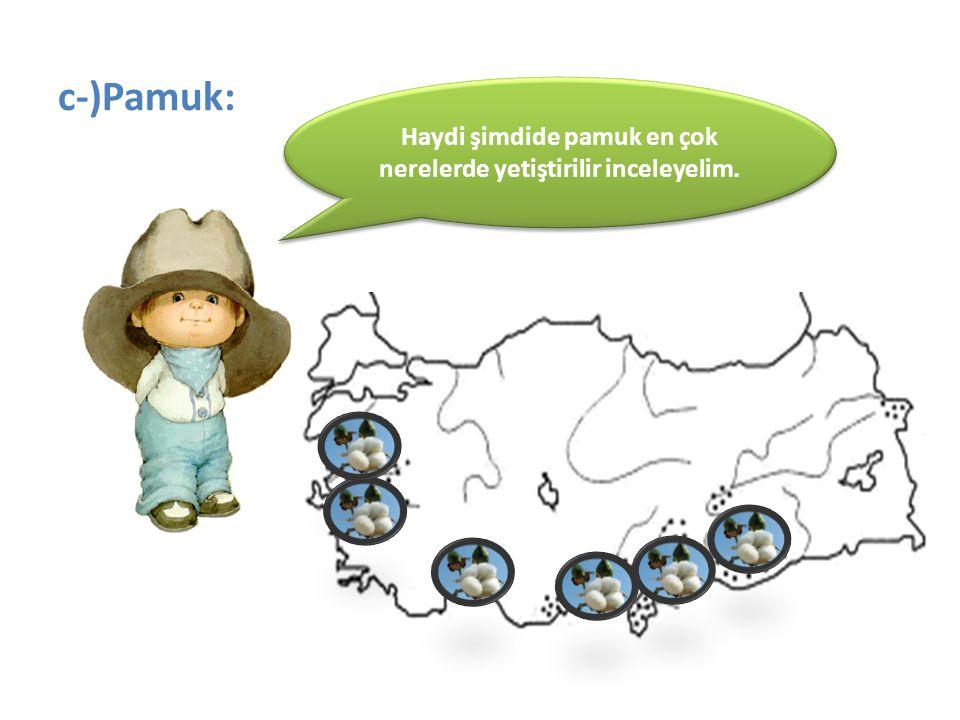 c-)Pamuk: Haydi şimdide pamuk en çok nerelerde yetiştirilir inceleyelim.