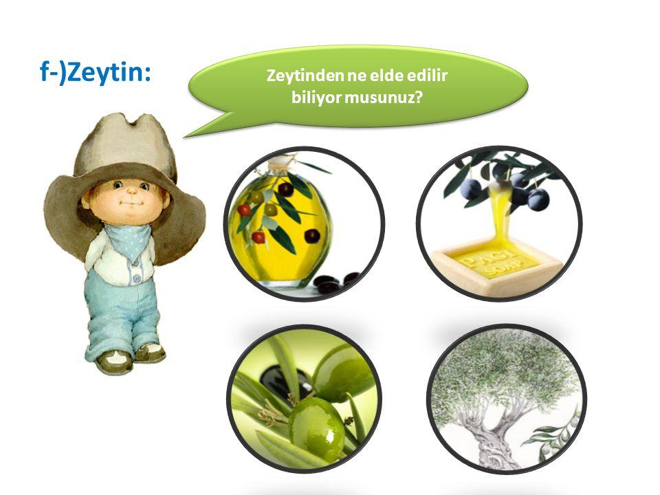 f-)Zeytin: Zeytinden ne elde edilir biliyor musunuz?