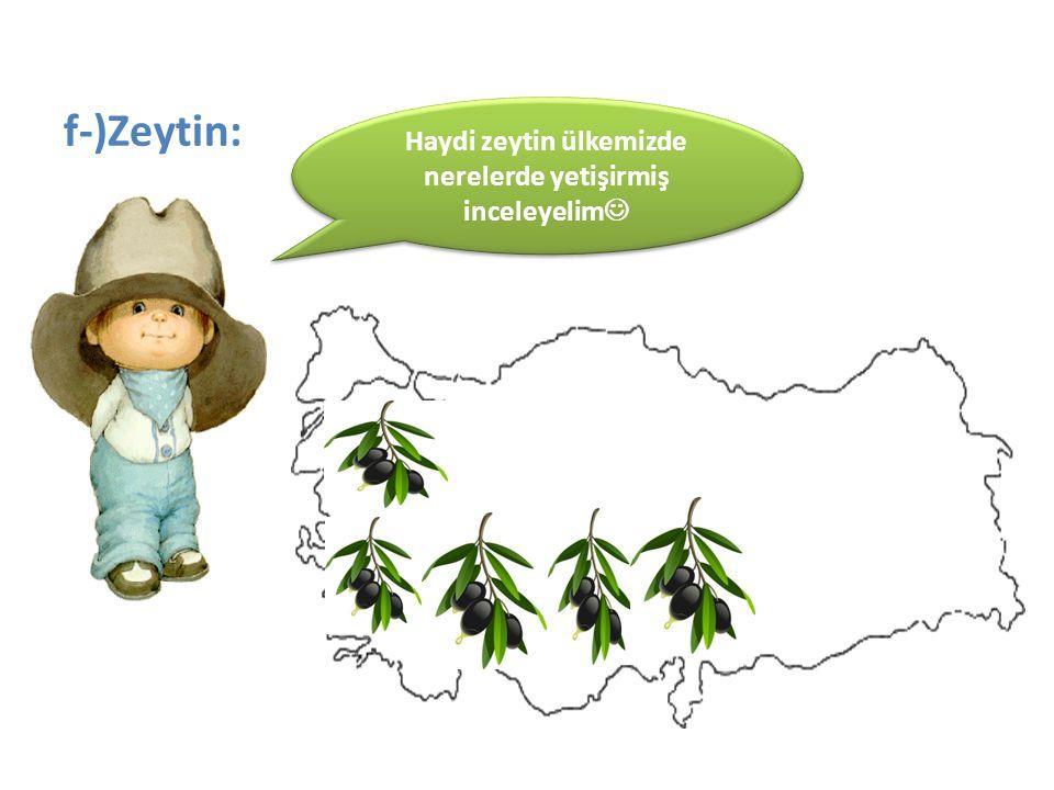 f-)Zeytin: Haydi zeytin ülkemizde nerelerde yetişirmiş inceleyelim