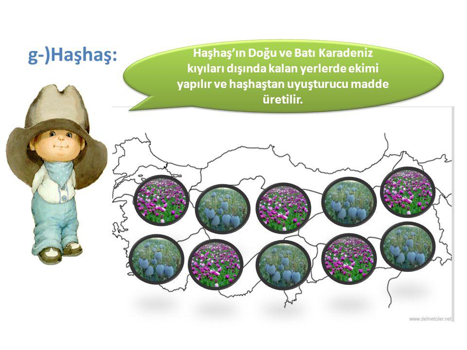 g-)Haşhaş: Haşhaş'ın Doğu ve Batı Karadeniz kıyıları dışında kalan yerlerde ekimi yapılır ve haşhaştan uyuşturucu madde üretilir.