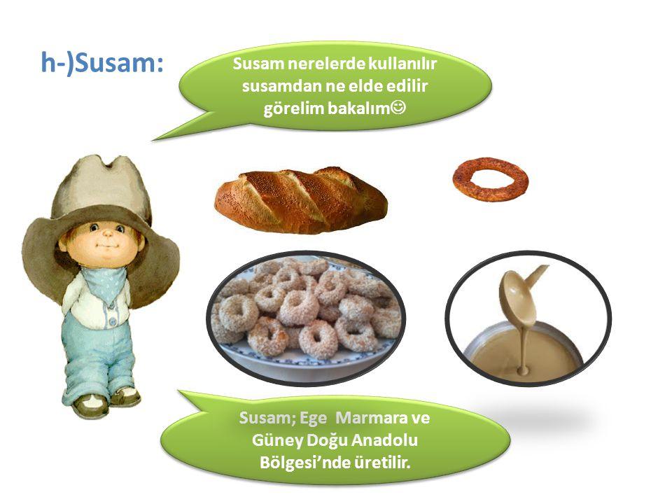 h-)Susam: Susam; Ege Marmara ve Güney Doğu Anadolu Bölgesi'nde üretilir. Susam nerelerde kullanılır susamdan ne elde edilir görelim bakalım