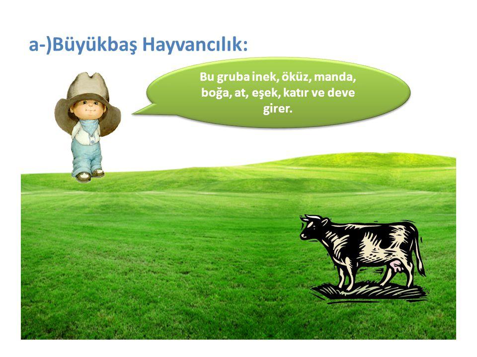 a-)Büyükbaş Hayvancılık: Bu gruba inek, öküz, manda, boğa, at, eşek, katır ve deve girer.