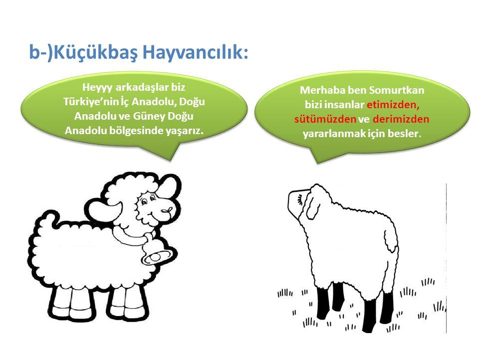 b-)Küçükbaş Hayvancılık: Heyyy arkadaşlar biz Türkiye'nin İç Anadolu, Doğu Anadolu ve Güney Doğu Anadolu bölgesinde yaşarız. Merhaba ben Somurtkan biz