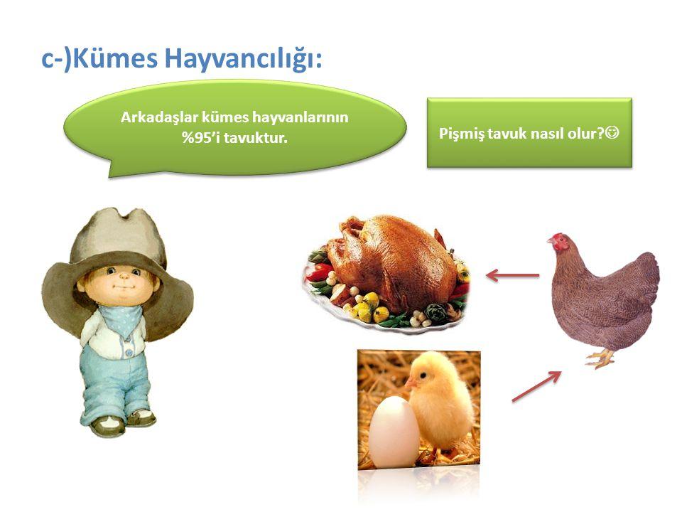 c-)Kümes Hayvancılığı: Arkadaşlar kümes hayvanlarının %95'i tavuktur. Pişmiş tavuk nasıl olur?