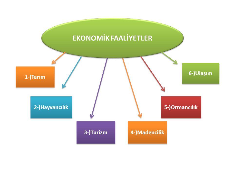 1-)Tarım 2-)Hayvancılık 3-)Turizm 4-)Madencilik 5-)Ormancılık 6-)Ulaşım EKONOMİK FAALİYETLER